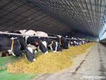 Правительство Самарской области уделяет особое внимание стимулированию животноводства в губернии